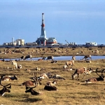 Drilling In ANWR Will Not Solve The Problem But It's A Start